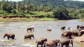 Stagno degli elefanti Fotografia Stock Libera da Diritti