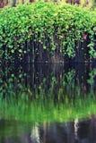 Stagno del giardino Fotografia Stock