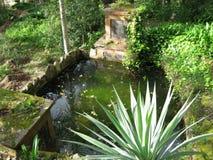 Stagno del giardino Immagine Stock
