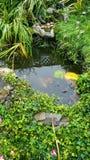 Stagno del giardino in autunno Fotografie Stock