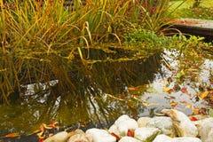 Stagno del giardino di autunno Fotografia Stock