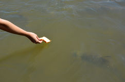 Stagno del pesce Fotografie Stock
