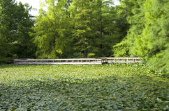 Stagno del ponte del giardino Fotografia Stock