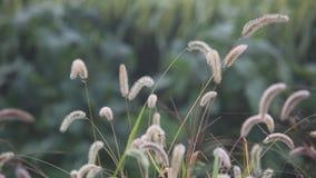 Stagno del vento di autunno in autunno video d archivio