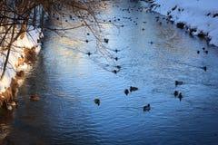 Stagno dell'anatra del parco di inverno nel giorno soleggiato Immagine Stock Libera da Diritti