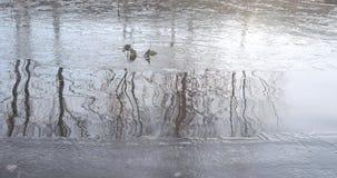 Stagno della cascata nel parco archivi video