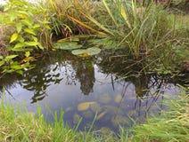 Stagno della fauna selvatica del giardino Fotografia Stock Libera da Diritti