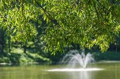 Stagno della fontana dei ramoscelli del salice Fotografia Stock