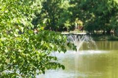 Stagno della fontana dei ramoscelli della betulla Immagine Stock Libera da Diritti