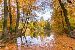 Stagno della foresta coperto di foglie di autunno degli alberi di faggio Fotografia Stock