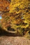 Stagno della foresta di autunno Immagini Stock