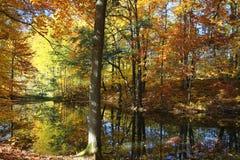 Stagno della foresta di autunno Fotografie Stock