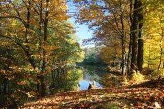 Stagno della foresta di autunno Immagini Stock Libere da Diritti