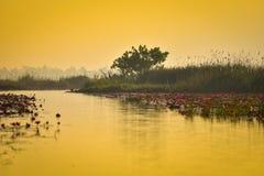 Stagno della palude di rosa di Lotus Fotografia Stock