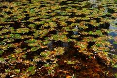 Stagno di autunno fotografia stock