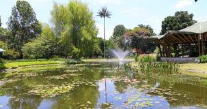 Stagno di Bogota con la fontana e le piante tropicali in giardino botanico video d archivio