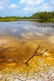 Stagno di Eco del parco nazionale dei terreni paludosi Fotografia Stock