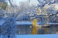 Stagno di inverno immagine stock libera da diritti
