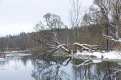 Stagno di inverno Fotografia Stock