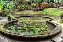 Stagno di Lilly al santuario di Goa Gajah Ubud, Bali immagini stock libere da diritti