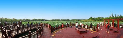 Stagno di loto panoramico Fotografie Stock Libere da Diritti