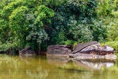 Stagno di marea e giungla tropicale, kood del KOH, Tailandia Fotografia Stock