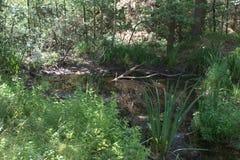 Stagno di medie dimensioni chiuso dagli arbusti ed e dalle piante della zona umida, ad un ramo caduto che si situa nell'acqua Fotografia Stock