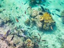 Stagno di pesce tropicale all'hotel intercontinentale della stazione termale e della località di soggiorno a Papeete, Tahiti, Pol Fotografia Stock Libera da Diritti