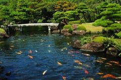 Stagno di pesci al giardino giapponese Fotografie Stock Libere da Diritti