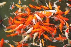 Animali marini e fauna dello stagno illustrazione for Pesci da stagno