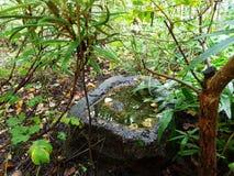 Stagno di pietra con acqua Fotografia Stock Libera da Diritti