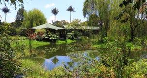 Stagno e natura di Bogota in giardino botanico archivi video