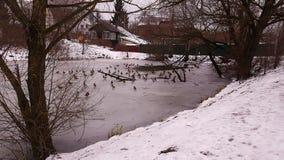 Stagno ed anatre di inverno Fotografie Stock