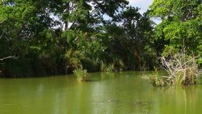 Stagno famoso 4k S.U.A. dell'azienda agricola dell'alligatore di Florida di giorno di estate video d archivio