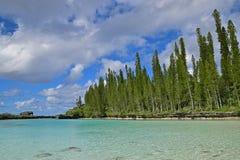 Stagno naturale con la fila dei pini alti salenti, delle nuvole bianche pesanti ed acqua del turchese di chiara Fotografie Stock