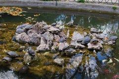 Stagno nazionale del giardino con le tartarughe Fotografia Stock