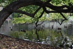 Stagno nel parco della città di Vienna fotografia stock libera da diritti