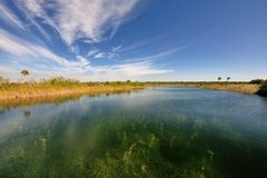 Stagno nel parco nazionale dei terreni paludosi Fotografia Stock Libera da Diritti