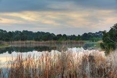 Stagno nella baia della palma, Florida Fotografie Stock Libere da Diritti