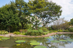 Stagno in parco con le foglie ed i fiori del loto Fotografie Stock Libere da Diritti