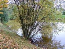 Stagno, passeggiata intorno ad uno stagno in autunno fotografia stock