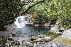 Stagno profondo della foresta pluviale Immagini Stock