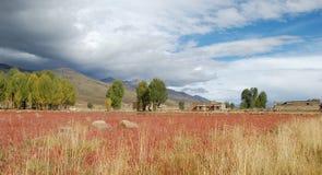 Stagno rosso dell'erba Immagine Stock
