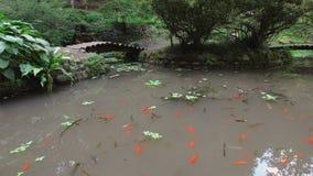 stagno stile giapponese con le carpe, i ponti ed i passaggi pedonali rossi nel parco archivi video