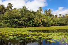 Stagno tropicale del giglio Fotografia Stock Libera da Diritti