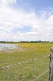 Stagno in un campo con la rete fissa Fotografia Stock