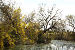 Stagno in una foresta di autunno Fotografie Stock Libere da Diritti