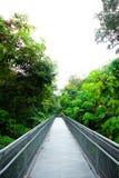 Stahlgehweg gehen zum Wald lizenzfreie stockfotos