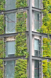 Stahlkonstruktiongebäude abgedeckt durch Grünpflanze Stockfotos