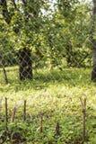 Stahlmaschendrahtzaun im Hintergrundapfelgarten Stockfoto